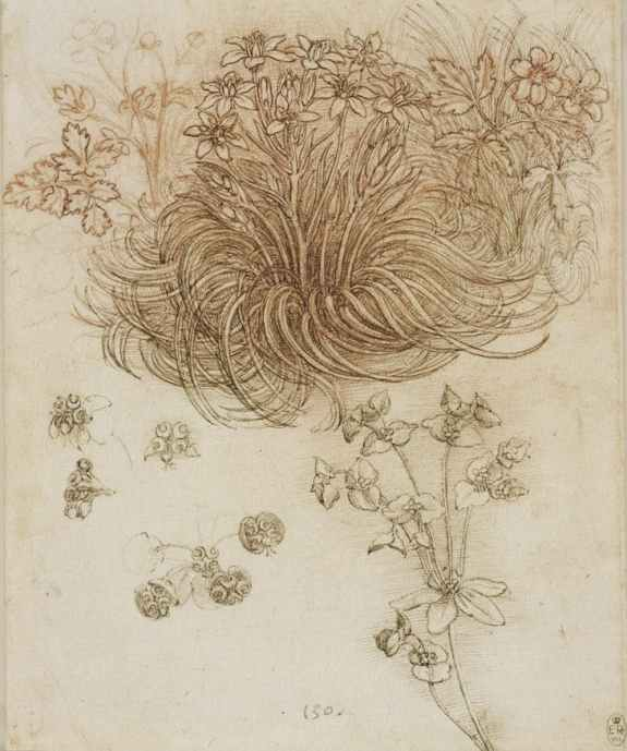 Leonardo 'A Star-of-Bethlehem and other Plants' (c.1506 - 12)